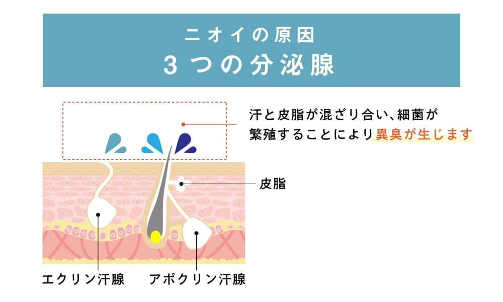 ミセルクリニック 大阪梅田院 切らないワキガ・多汗症治療 ミラドライ ニオイの原因 3つの分泌腺
