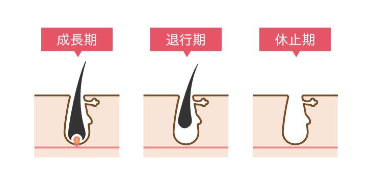 来年の夏にはツルすべ肌に!秋冬の医療脱毛はなぜ良いの?|ミセルクリニック